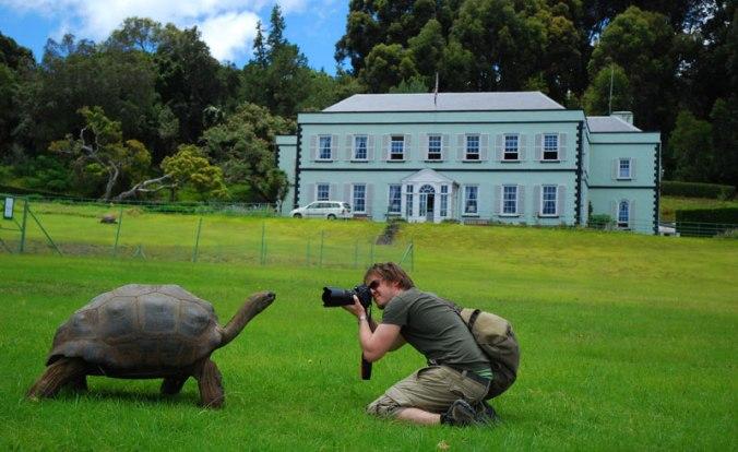 st-helena-plantation-house-tortoise